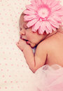 Adorable sleeping newborn baby girl Stock Photos