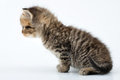Adorable small tabby  kitten Stock Photo