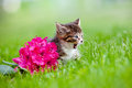 Adorable tabby kitten meows meowing outdoors summer Royalty Free Stock Photo