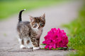 Adorable tabby kitten portrait outdoors summer Stock Images