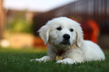 Adorable white puppy sitting on grass