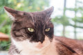 Adult cat look furiously with nature light Royalty Free Stock Photo