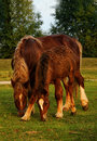 Adult horse and colt on the meadow Stock Photo