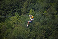 Adult woman on zip line the Stock Photos