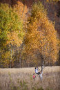 Adventure of children three playing near birch in a autumn meadow Royalty Free Stock Images