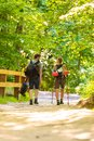 Couple backpacker hiking in forest pathway Royalty Free Stock Photo