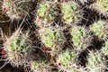 Aerial View Of Barrel Cacti Fe...