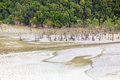 Aerial view from beach at low tide in bako national park malaysia borneo Stock Image