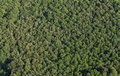 Aerial view of the forest Royalty Free Stock Photo