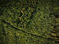 Aerial view of forests Royalty Free Stock Photo