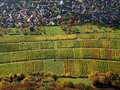 Aerial view to vineyard at village in Indian summer Royalty Free Stock Photo