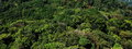 Aerial view of a green forest