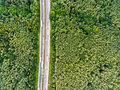 Aerial view of highway, traffic jam, green forest, Netherlands Royalty Free Stock Photo