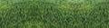 Di enorme verde sano