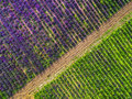 Aerial view of levender field Royalty Free Stock Photo