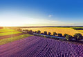 Aerial view of levender field . Wide angle. GoPro, Royalty Free Stock Photo