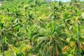 Aerial view palm tree jungle in Caribbean Royalty Free Stock Photo