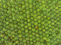 Aerial view on plantation of palm trees Royalty Free Stock Photo