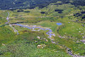 Aerial View of the Pond and the Stream Royalty Free Stock Photo