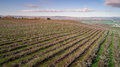 Aerial view of rows of trees in a fruit orchard in spring Royalty Free Stock Photo