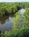 Aerial view tropical mangrove wetland a unique photograph showing the beautiful tropics landscape scenery of a river estuarine Stock Images