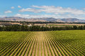 Aerial view of vineyard plantation in new zealand Stock Photos
