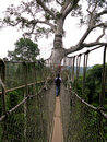 Aerial Walkway at Kakum Royalty Free Stock Images