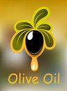 Affiche ou design de carte d huile d olive Photos libres de droits
