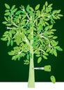 Afforestation Is Success Key_eps