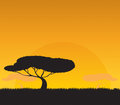 Africa landscape the background of the setting sun Stock Images