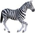 Africa Nature Zebra, Wildlife, Isolated Royalty Free Stock Photo