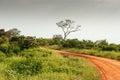 Africa on safari in the savannah of Stock Photos
