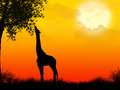 Africa safari silhouette landscape with giraffe and sunset Stock Photos