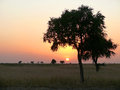 Africa. Southwest Sudan. Sunset. Landscape nature. Royalty Free Stock Photo
