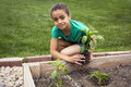African american girl planting a new plant cute young green pepper in her family garden Royalty Free Stock Photos