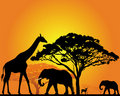 African animals Royalty Free Stock Images