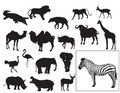 African animals collection Stock Photography