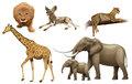 African animals illustration of the on a white background Royalty Free Stock Photography