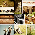 African animals safari collage wild large group of fauna diversity at continent natural themed collection background Stock Images