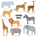 African animals of savanna elephant, rhino, giraffe, cheetah, zebra, lion, hippo . Vector illustration