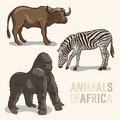 African animals set vector of gorilla buffalo and zebra Royalty Free Stock Photography
