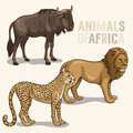 African animals set vector illustrations of isolated on a light background lion cheetah wildebeest Stock Photography