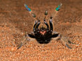 African baboon spider Stock Photo