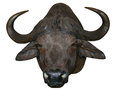 African buffalo head on white bacground Royalty Free Stock Images