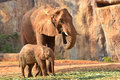African elephant and baby eating grass Stock Photos