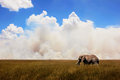 African elephant in the background of the sky . Royalty Free Stock Photo