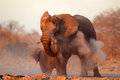 African elephant covered in dust large loxodonta africana etosha national park namibia Royalty Free Stock Photography