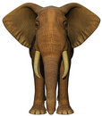 African elephant front Royalty Free Stock Photo