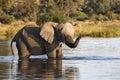 African Elephant - Okavango De...