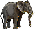 African elephant side view illustration isolated on white background Stock Photos